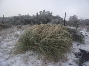 Fenômeno deixou a vegetação branca (Foto: Sérgio José de Lima/Prefeitura de Urubici)