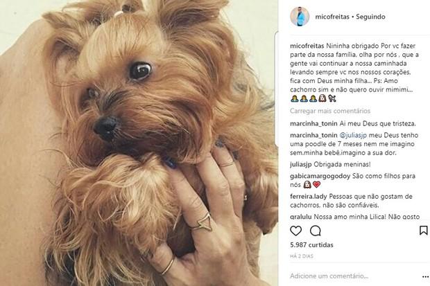 Mico Freitas presta homenagem após morte da cachorra Nininha (Foto: Reprodução/Instagram)