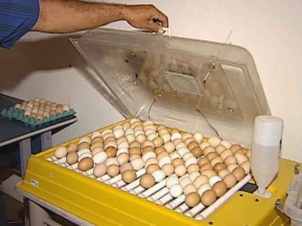 Chocadeira não funciona sem energia e ovos estragaram  (Foto: reprodução/TV Tem)