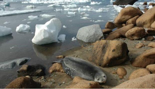 Antártica teve 'vida' no passado, quando temperatura era mais amena; hoje, poucas espécies conseguem sobreviver na região. (Foto: Alexandre Kellner/BBC)