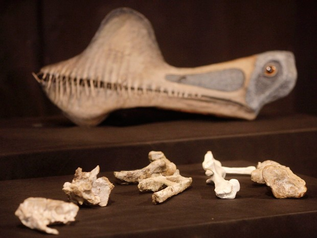Fósseis do mais importante animal pré-histório descoberto no Brasil  (Foto: Ricardo Moraes/ Reuters)