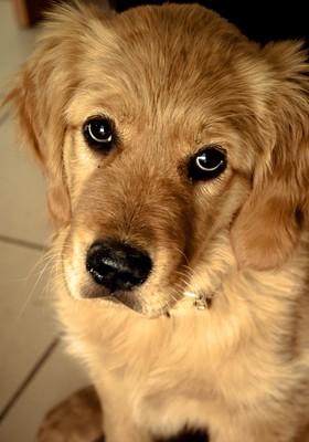cachorro em casa (Foto: SXC)