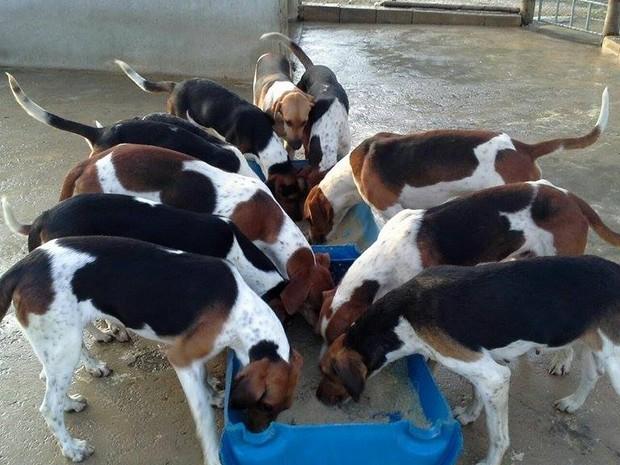 Pará de Minas, caçadores, cães,  (Foto: G1/G1)