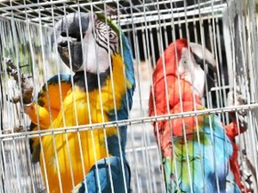 Polícia Ambiental apreende 11 aves em um cativeiro em João Pessoa (Foto: Walter Paparazzo/G1 PB)
