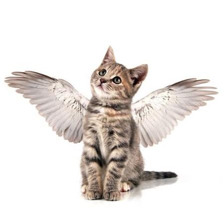 Islamismo permite que apenas gatos sejam animais de estimação (Foto: Reprodução/ Papo de Pet  )