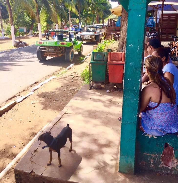 Cão Pablo na parada de ônibus