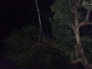 Queda de galho causou apagão em parte do bairro Nova Porto Velho (Foto: Toni Francis/G1)