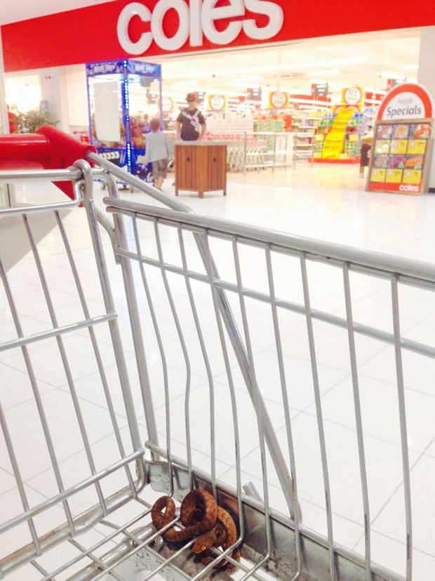 Caso ocorreu em supermercado em Caboolture (Foto: Reprodução/Facebook/Sunshine Coast Snake Catchers)