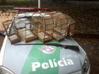 Polícia Ambiental flagra homem com pássaros silvestres em cativeiro
