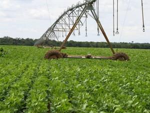 Pivô de irrigação em lavoura de soja em Mato Grosso (Foto: Amanda Sampaio/G1 MT)