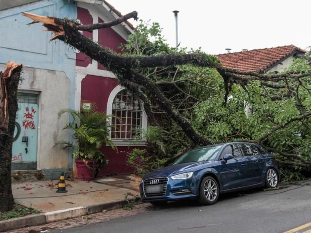 Árvore quebra e cai sobre carro na Zona Oeste de SP após temporal desta quinta (20) (Foto: Marivaldo Oliveira/Código19/Estadão Conteúdo)