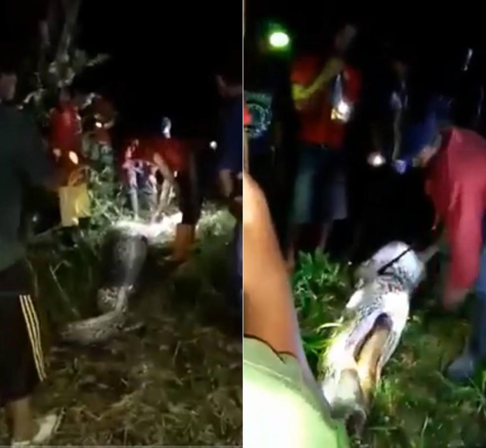 Corpo de indonésio é encontrado dentro de cobra de 7 metros (Foto: Reprodução/YouTube)