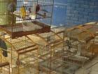 Pássaros silvestres em cativeiros são apreendidos na Grande Vitória
