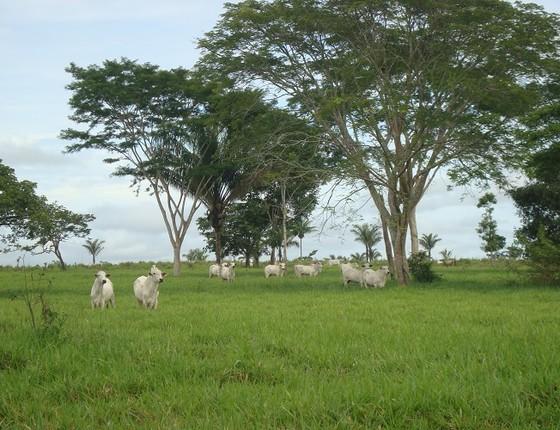 Fazenda de gado na Amazônia (Foto: cc)