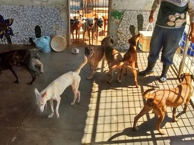 Além da casa dele, galpões são utilizados pelo policial para abrigar os animais (Foto: Patrian Junior / Arquivo Pessoal)