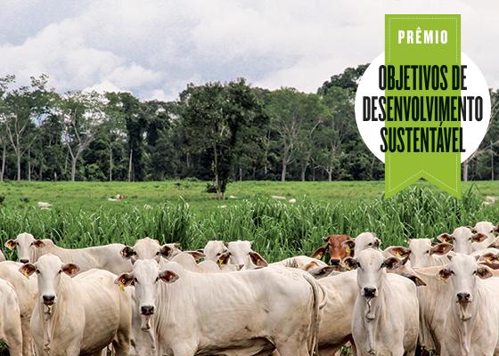 PECSA - A saída para a pecuária na Amazônia (Foto: divulgação)
