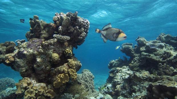 Vista da Grande Barreira de Corais, com sua variedade de cores e espécies, já está disponível no site do projeto. (Foto: Divulgação / The Catlin Seaview Survey)