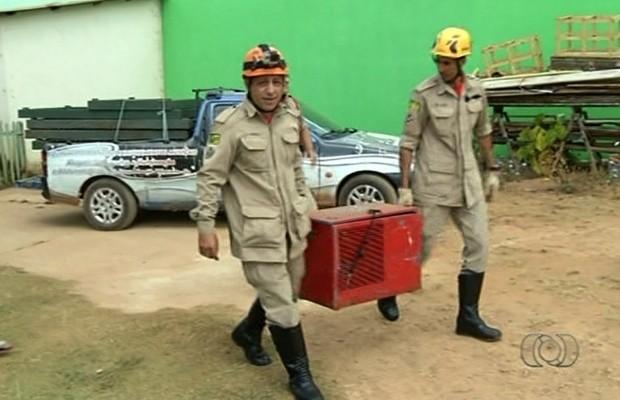 Raposa foi colocada em gaiola e levada para ser examinada por veterinário em Valparaíso de Goiás (Foto: Reprodução/TV Anhanguera)