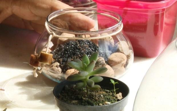 Arquiteto de Boa Vista mostra opções de micro-jardins em vasos (Foto: Roraima TV)