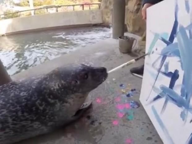 Foca Blue é um dos animais artistas do zoológico Buttonwood (Foto: Reprodução/Facebook/Buttonwood Park Zoo)
