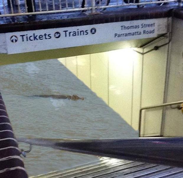 Foto falsa mostra crocodilo em estação de trem alagada em Sydney (Foto: Reprodução/Twitter/Jamshed Ali)