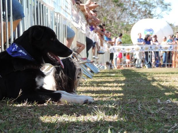 Cães observam apresentação de agility no Parque do Rio Jaú (Foto: Alan Schneider/G1)