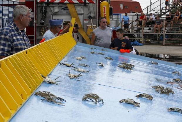 Festival em Crisfield promoveu corrida entre caranguejos (Foto: Jonathan Ernst/Reuters)