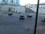 Cães nas ruas serão tema de audiência em Carmo do Cajuru
