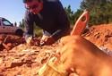 Fóssil de dinossauro carnívoro é encontrado