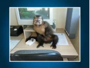 Macaco posou para foto em delegacia  (Foto: Reprodução / RPCTV)