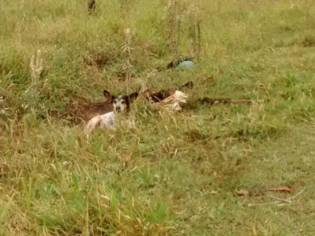 Cachorro estava no terreno ao lado do corpo do dono (Foto: Assis City/Divulgação)