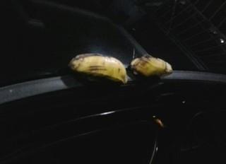 Chagas encontrou bananas em seu veículo (Foto: Márcio Chagas/Arquivo Pessoal)