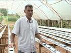 Além da seca, calor causa perdas na produção de hortaliças de SP