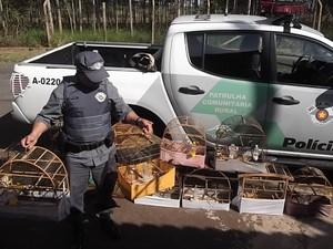 Mais de 50 pássaros foram apreendidos em Bauru  (Fot Divulgação/ Polícia Ambiental)