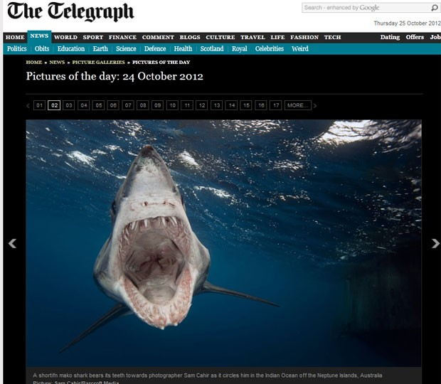 Fotógrafo fez foto impressionante de tubarão em posição de ataque. (Foto: Reprodução/Daily Telegraph)
