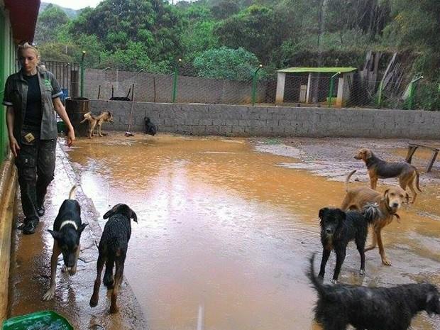 Cães foram resgatados em Bento Rodrigues, distrito de Mariana, após rompimento das barragens.  (Foto: Carla Sássi/Arquivo pessoal )