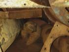 Tamanduá é resgatado dentro de borracharia em Guaxupé, MG