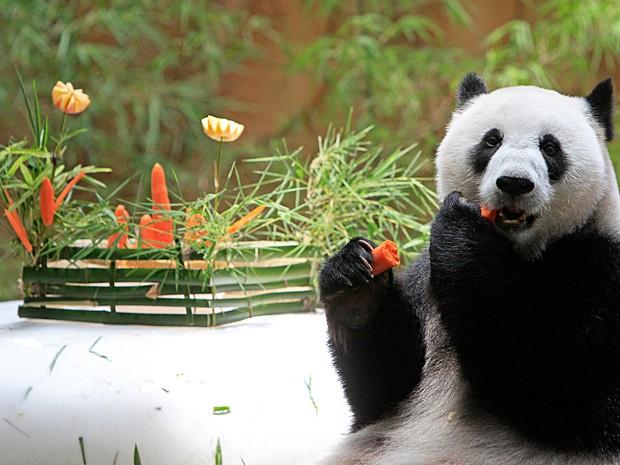 Panda saboreia cenoura no zoológico em Kuala Lumpur (Foto: AP Photo/Lai Seng Sin)