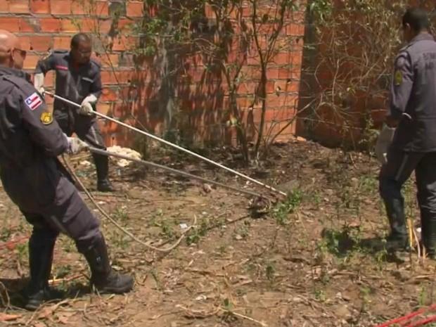 Bombeiros foram chamados para capturar o jacaré (Foto: Reprodução/TV Subaé)
