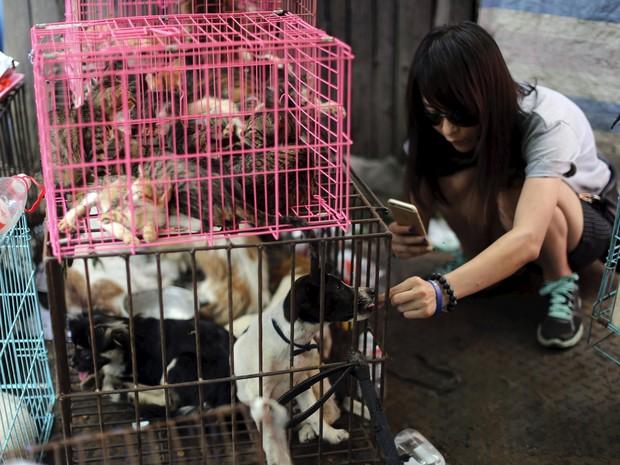 Animais à espera para serem abatidos em festival que consome carne canina na China (Foto: Reuters/Kim Kyung-Hoon)