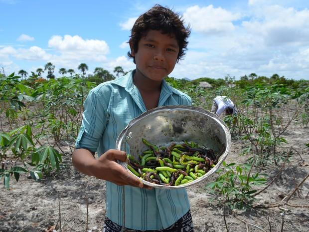 Wendel Paulino, de 13 anos, dedicou uma manhã inteira para colher lagartas na comunidade Raposa I (Foto: Emily Costa/ G1 RR)