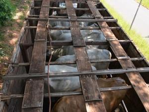 Bois foram abandonados em caminhão (Foto: Divulgação / Polícia Rodoviária Federal)