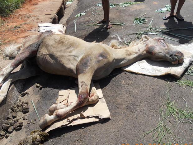 Animal permanece no Parque José Rotta, em Presidente Prudente (Foto: Eugênia Almeida/Arquivo Pessoal)