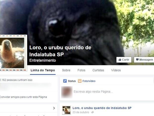 Página do Loro, o urubu famoso de Indaiatuba, na rede social (Foto: Reprodução / Facebook)