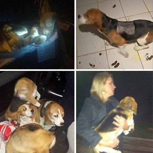 Carol Dias posta foto sobre Beagles (Foto: Instagram/Reprodução)