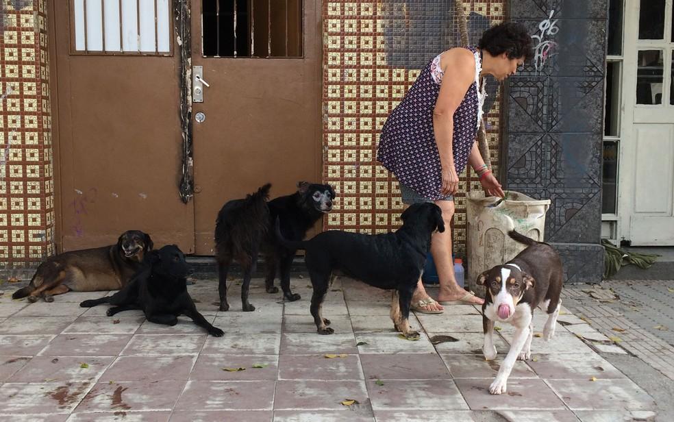 Entrada da pensão onde vivem 80 animais na Cracolândia (Foto: Paulo Toledo Piza/G1)