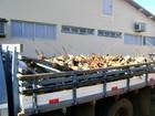 Polícia em MS apreende caminhão carregado com madeira ilegal
