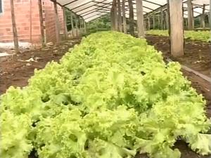 Período chuvoso é um vilão para a produção de hortaliças (Foto: Reprodução/TV Anhanguera)