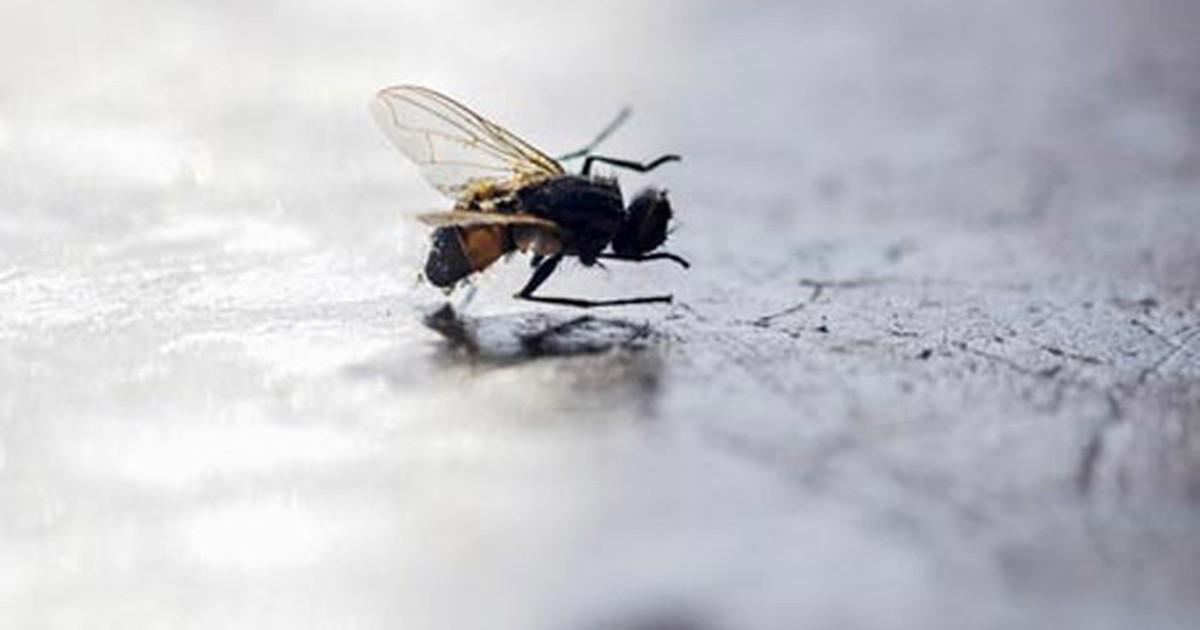 G1 truques para espantar moscas de casa not cias em - Como espantar moscas ...