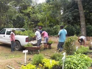 As plantas ficarão no horto municipal (Foto: Divulgação/Inea)